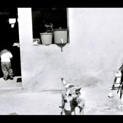Chiapas, 2007