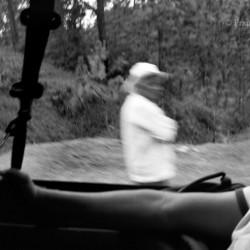 Chiapas, 2008