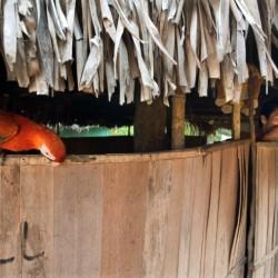 San Francisco, Shipibo indian village, Amazon